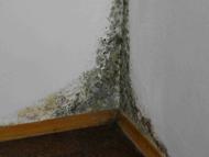 Muffa muri in casa nuova - Muffa sui muri esterni ...